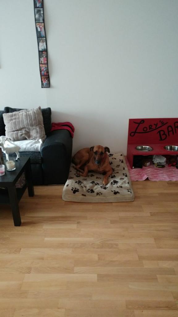 سگ صاحبخونه Airbnb وین