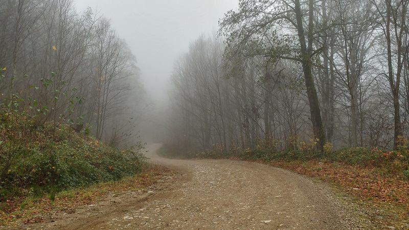 تجربه سفر به جنگل راش
