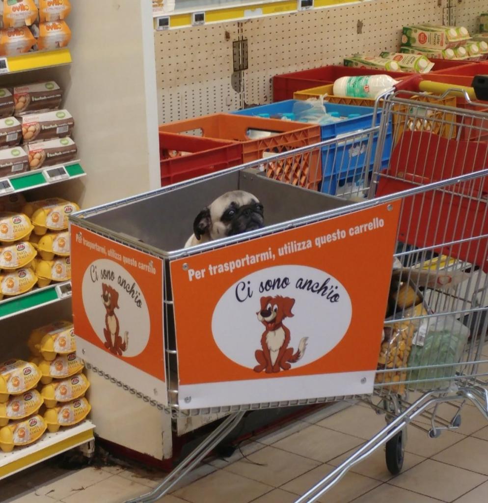 سبد فروشگاهی مخصوص سگ