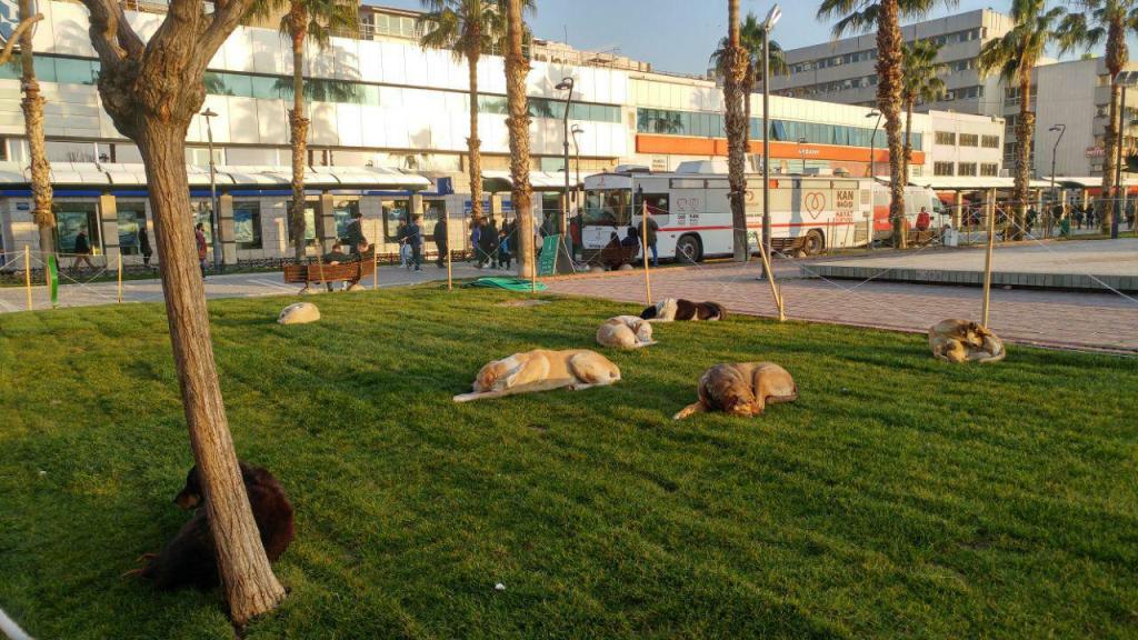 سگهای شهری ازمیر