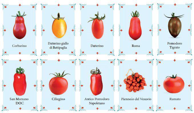 انواع گوجه ایتالیایی